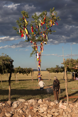 Prayer Tree of the Sun Dance